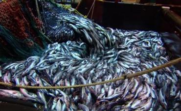 Día del trabajador de la Pesca Industrial
