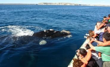 Preparan la próxima temporada de ballenas en Puerto Madryn