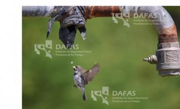 Ganadores del 4to Concurso de Fotografía de DAFAS