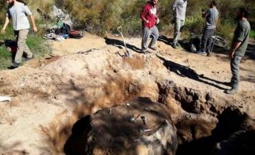 Una especie de gliptodonte fue hallada en una calle de la ciudad de Santa Rosa
