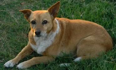 28 de Mayo Día Internacional del Perro sin Raza
