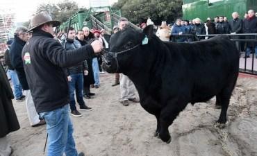 Un toro de Acha
