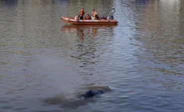 El cetáceo llegó hasta Puerto Madero pasadas las 10 de la mañana