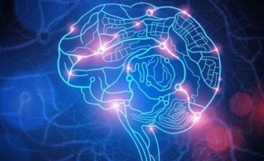 El nutriente necesario para un cerebro saludable