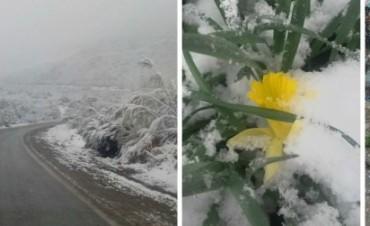 La nieve llegó a Bariloche en plena primavera