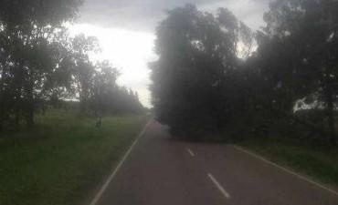 El fuerte viento provocó situaciones realmente preocupantes
