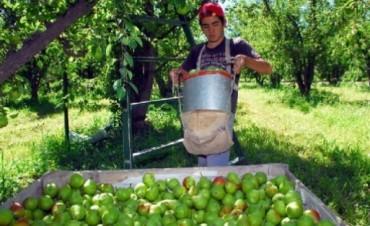 La Asociación de Productores y Exportadores de Frutas (Aspeff), advirtió