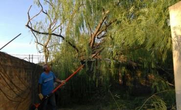 Árboles caídos y daños tras la tormenta en Santa Rosa