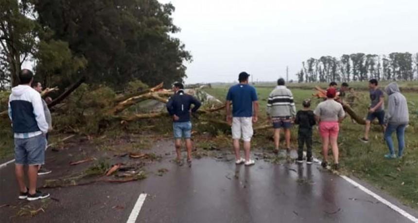 Una fuerte tormenta tiró árboles y cortó una mano de la Ruta Provincial 1
