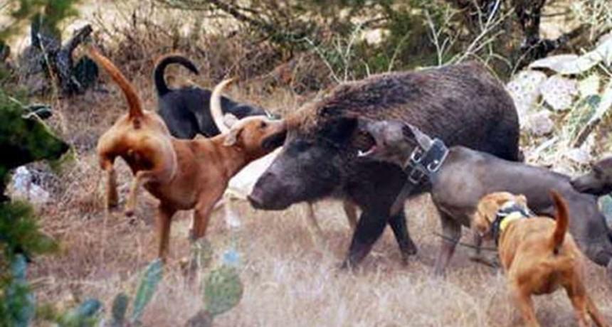 Habilitaron la temporada de caza deportiva mayor, menor y con jauría