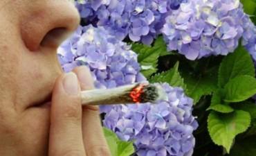 HORTENSIA, LA NUEVA DROGA