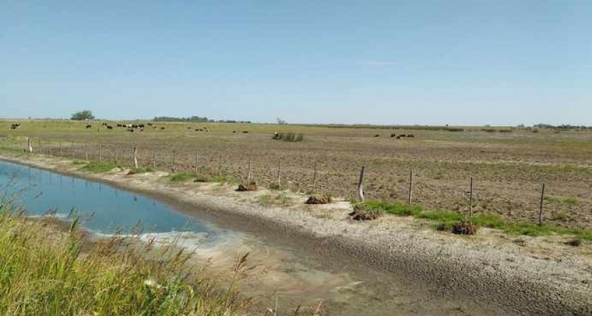 Declararon emergencia agropecuaria por la sequía en La Pampa