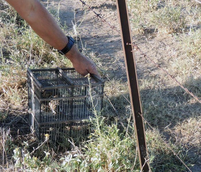 Rescataron más de 30 especies de aves autóctonas