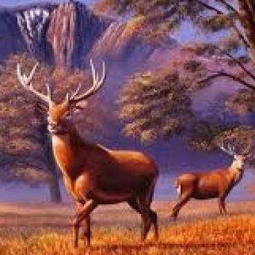 LA PAMPA: el espectáculo de ciervos colorados en brama empieza el sábado