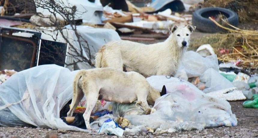 Protectoras de animales forman red provincial