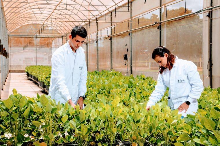 BASF innova para una agricultura cada vez más sustentable