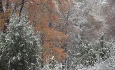 La primera nevada que tiñó de blanco a San Martín de los Andes