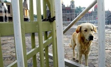 El 27 de julio se conmemora el día de los canes sin familias