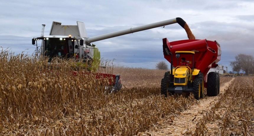El 57,4% de la renta agrícola en La Pampa es retenida