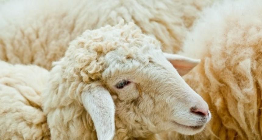 Se entregaron créditos a tasa cero para el sector ovino