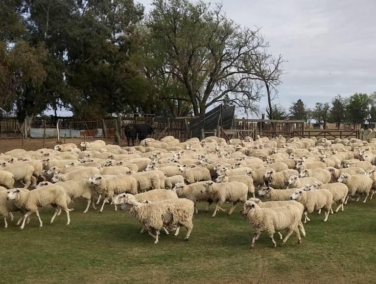 Destinan fondos para productores ovinos y caprinos