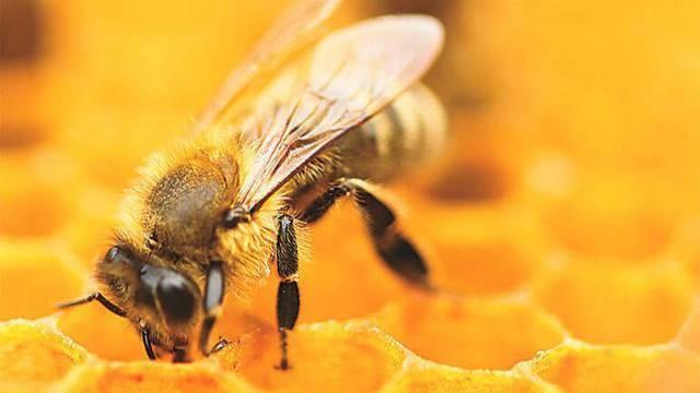 Dictarán un curso de iniciación apícola para jóvenes y adultos