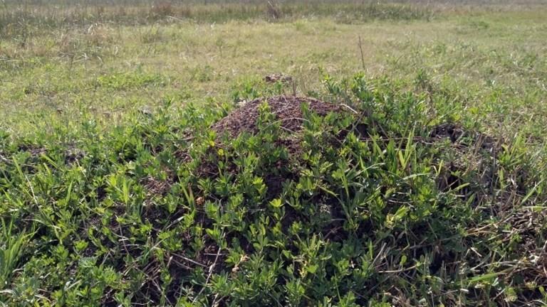 ¿Por qué es importante sembrar Lotus en los campos?