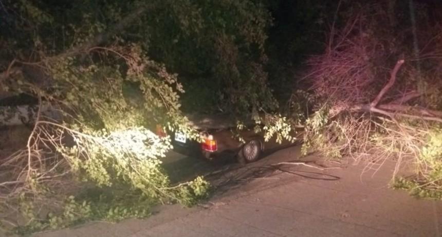 Un árbol cayó y aplastó a un auto en el Rosendo López