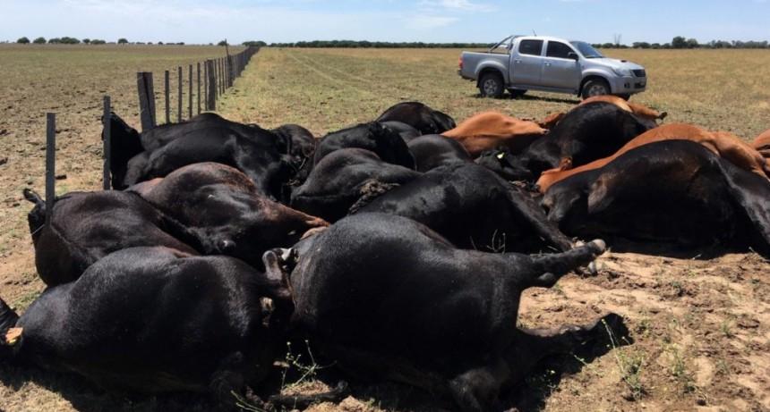 Un rayo mató 22 vacas en una de las mejores cabañas de La Pampa